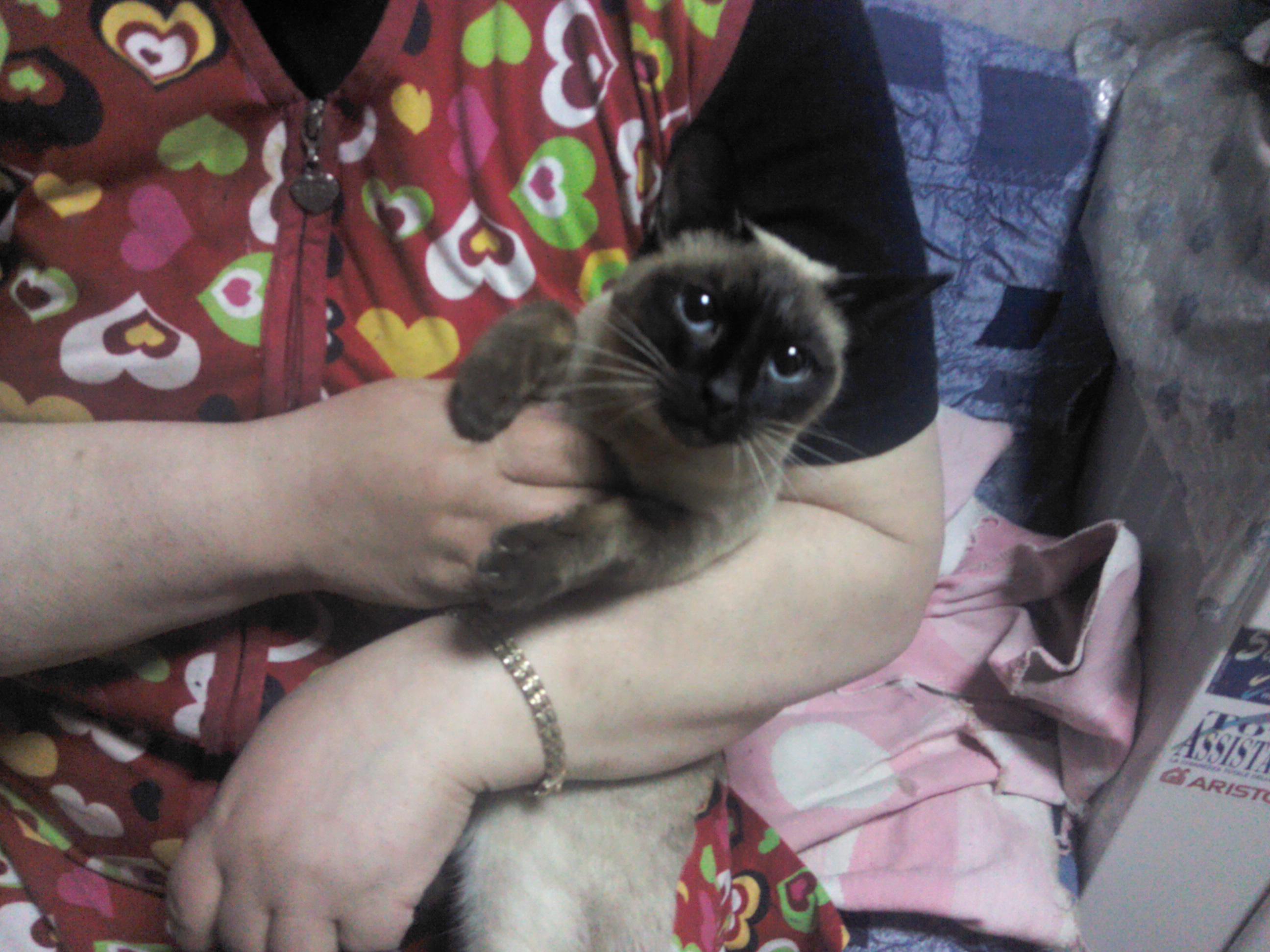 фото кошек и котят черных #16